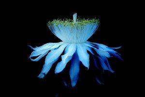 In bloom_finally felix