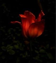 finally-felix_oct-flower