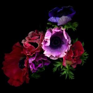 FF Flower March 17